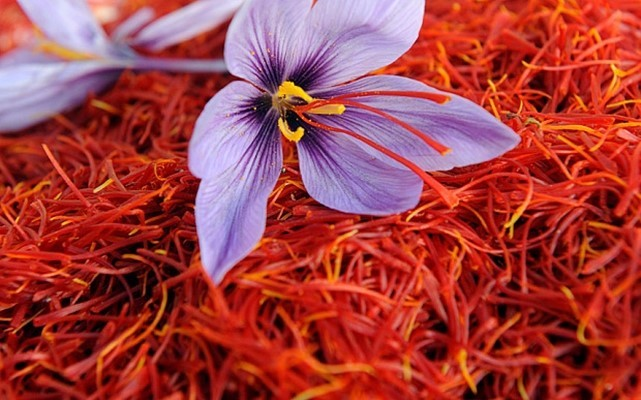 Acceptance of Iranian saffron standards by European countries