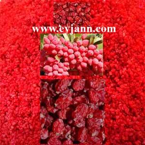 Iranian barberry high quality